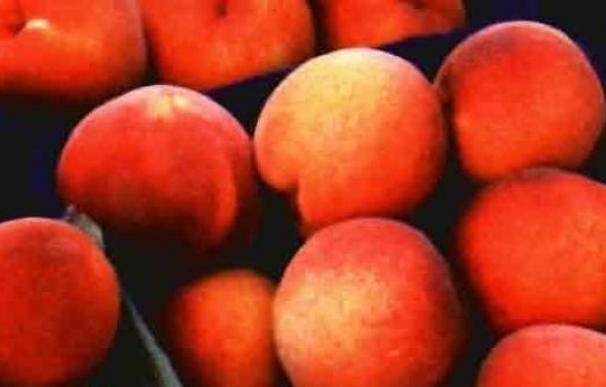 "La UAGR-COAG alerta de la ""crisis de precios"" en origen de la fruta de hueso"