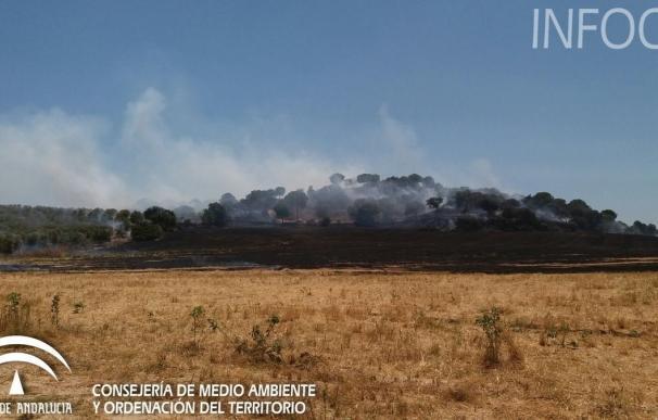 El Infoca da por extinguido el incendio forestal de Gibraleón