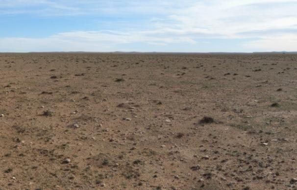 La estepa de esparto de Argelia está en peligro de desertificación, según alerta el CSIC
