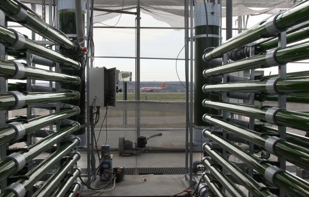 El 'búnker' de AlgaEnergy, donde las microalgas se convierten en combustible