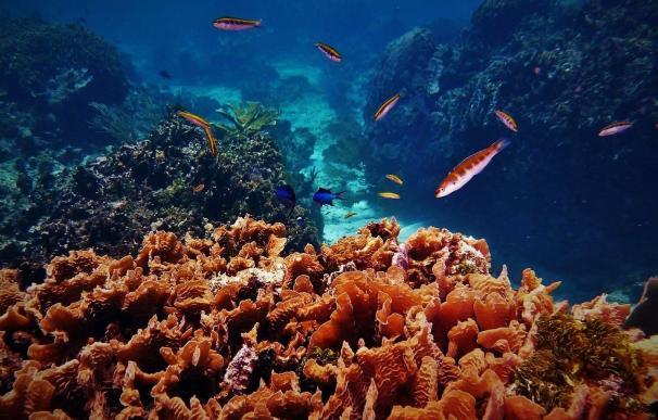 La UICN alerta de que la pesca excesiva y la pérdida de arrecifes amenazan las pesquerías del Pacífico y Caribe