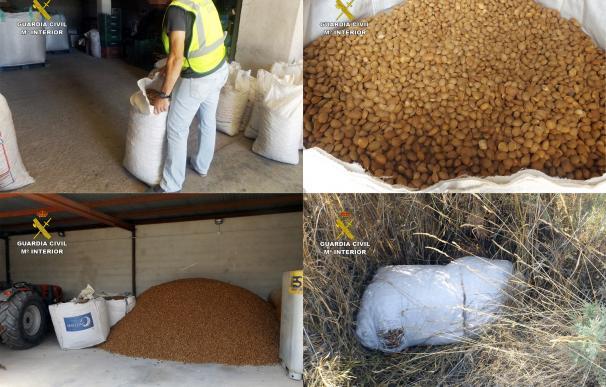 Cae un grupo delictivo dedicado a la sustracción y comercialización ilícita de almendra en Murcia y Albacete