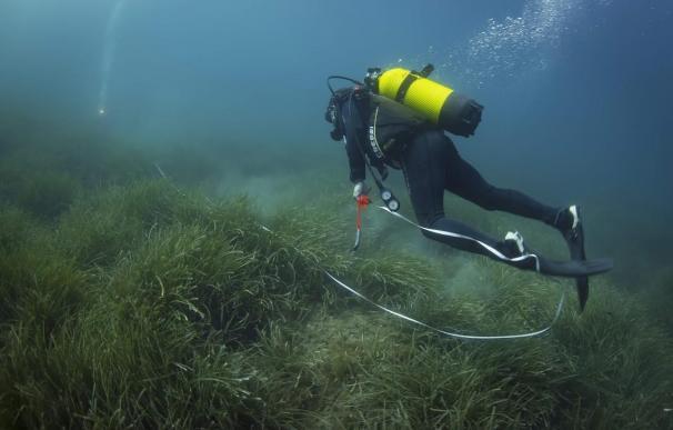 Calvià impulsa el proyecto 'La Mar' para evaluar el estado de la posidonia