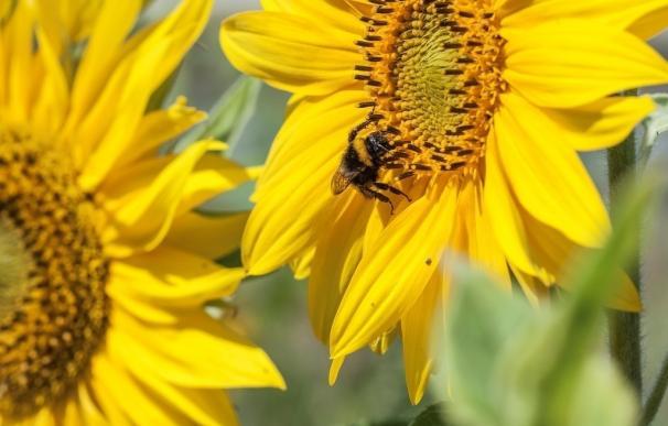 """La industria fitosanitaria concluye que el declive de las abejas se debe a causas """"multifactoriales"""" y pide más estudios"""