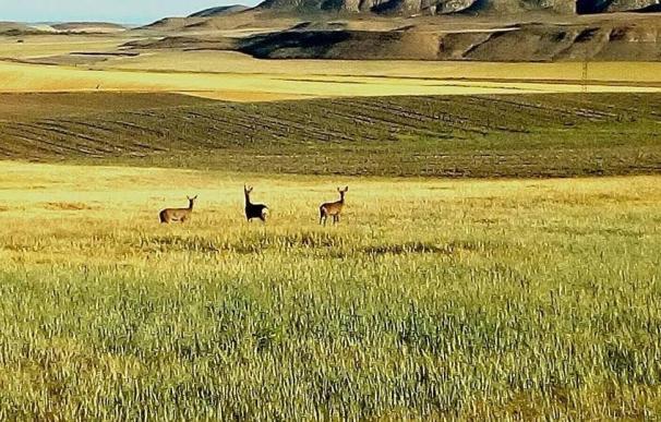 La oposición rechaza tramitar en el Congreso una ley que permitía excepciones para la caza y pesca de especies invasoras