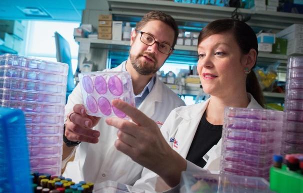 Científicos utilizan un fármaco antitumoral en desarrollo para combatir la gripe y acelerar la recuperación