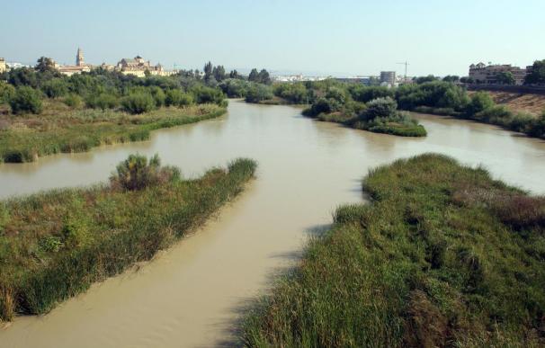 Dos compuestos químicos de las cremas con filtro UV contra el sol podría llevar a la extinción a los peces de río