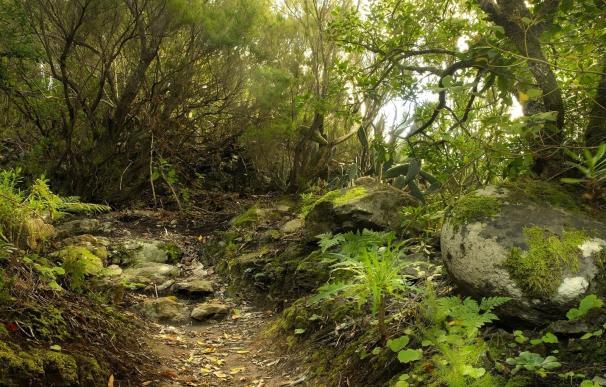 Elaboran un inventario con más de 300 documentos sobre caminos tradicionales de Santa Cruz de Tenerife