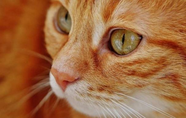 El Congreso pide al Gobierno aumentar las penas por abandono y maltrato de animales domésticos y prohibir su sacrifico