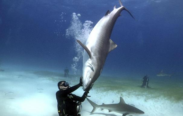 El hombre que susurraba a los tiburones