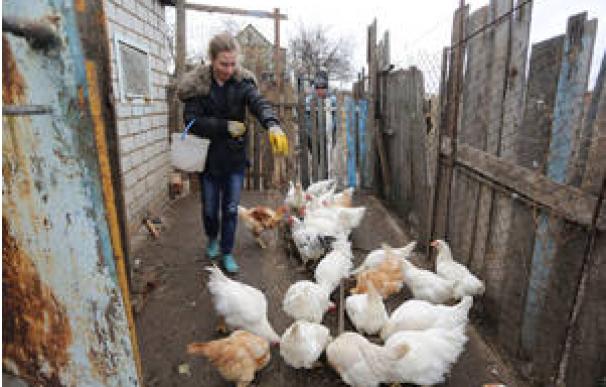 La FAO alerta de una situación de alerta alimentaria entre los campesinos del este de Ucrania. /FAO