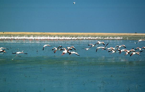 El Gobierno aprueba la entrada en vigor de un acuerdo para proteger las aves acuáticas migratorias
