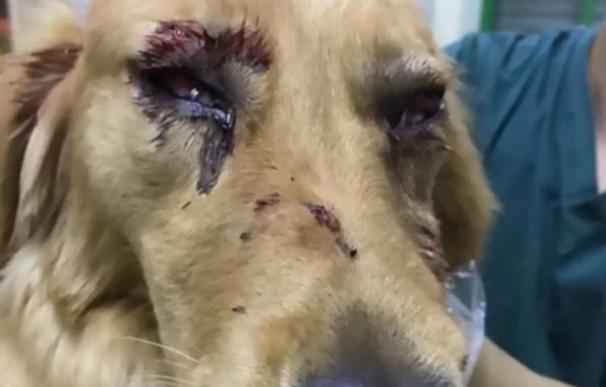 El personal de un aeropuerto chino maltrata a un perro y le provoca graves lesiones