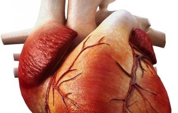 Nuevos genes de riesgo de enfermedad cardiaca apuntan a defectos en las paredes de los vasos sanguíneos