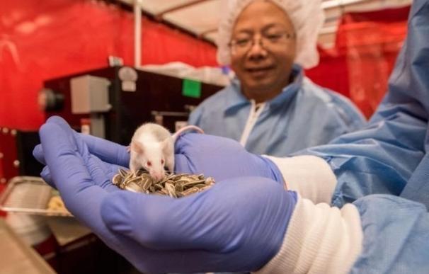 La hipoxia invierte la enfermedad mitocondrial en un modelo de ratón