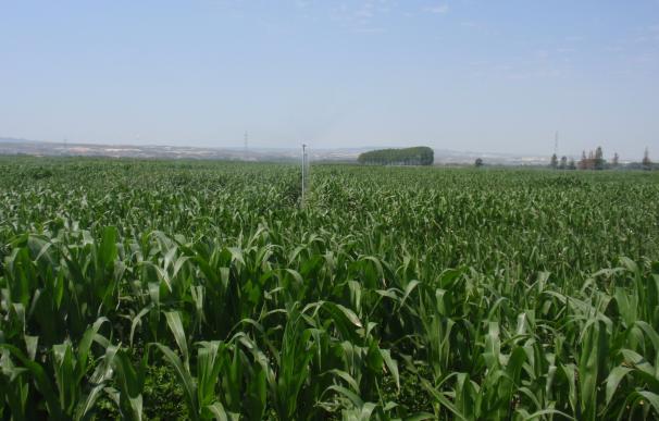"""La DPT y Cereales Teruel acuerdan convertir """"El Chantre"""" en un centro de investigación agrícola"""