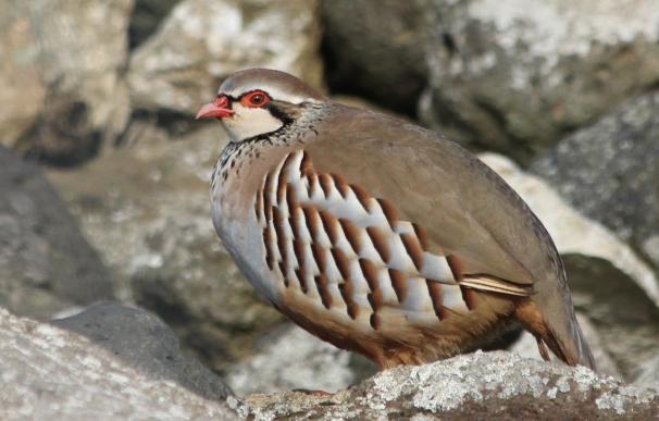 """Ecologistas recurrirá a los tribunales la orden de veda de caza en C-LM, """"un incumplimiento grave"""" del Gobierno regional"""