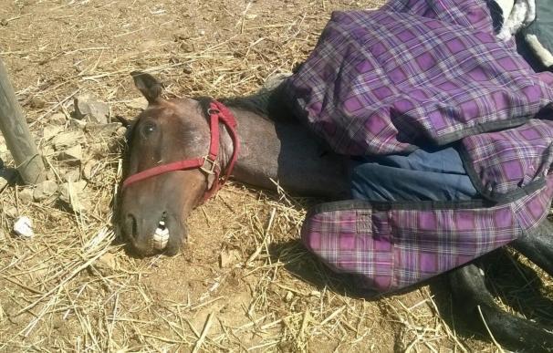 Detenido el dueño de una finca de Cádiz donde murió deshidratado un caballo
