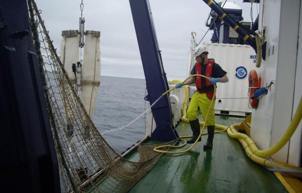 La campaña Bioman 2017 estima una biomasa de en torno a 85.000 toneladas de anchoa en el golfo de Vizcaya