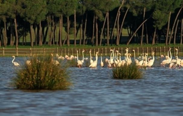 """El Defensor alerta sobre los """"riesgos"""" en la conservación de Doñana y """"urge"""" a adoptar medidas para su protección"""