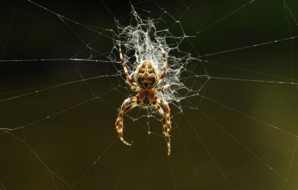 Un hombre quería matar una araña y termina quemando la casa del vecino