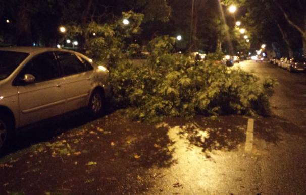 La tormenta daña 605 árboles en la capital, con Fuencarral-El Pardo y Hortaleza como distritos más afectados