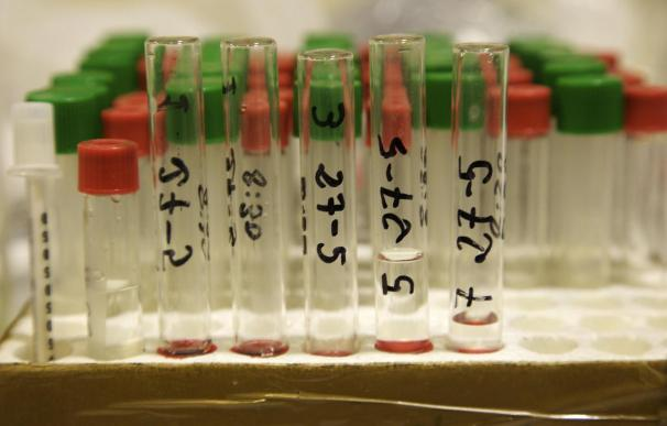 Científicos convierten células sanguíneas en neuronas sensoriales