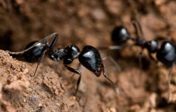 CyL encabezó el ranking de plagas de hormigas y avispas en España durante el pasado año 2013