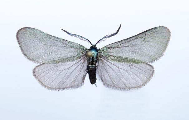Investigadores de la UMU investigan los diferentes grupos de insectos que habitan los distintos ecosistemas peninsulares