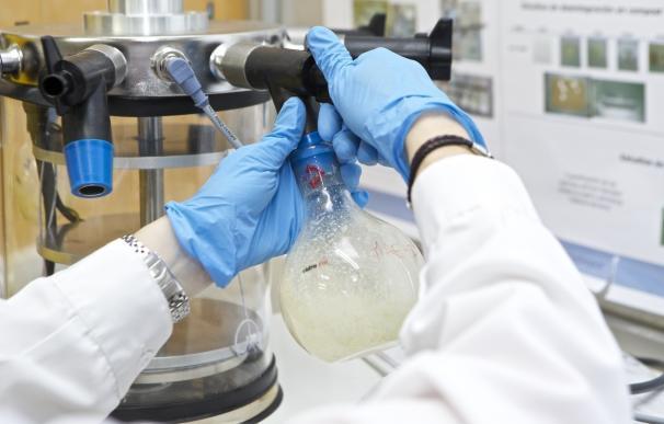La UA participa en una investigación para obtener productos de limpieza o plásticos ecológicos con restos de champiñón