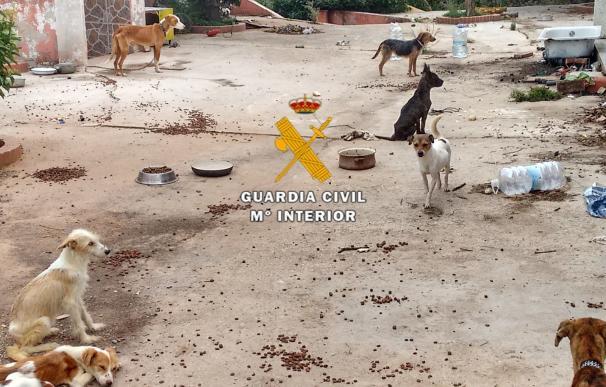 La protectora Scooby recoge 636 perros en CyL en los cuatro primeros meses del año, el doble que en 2016