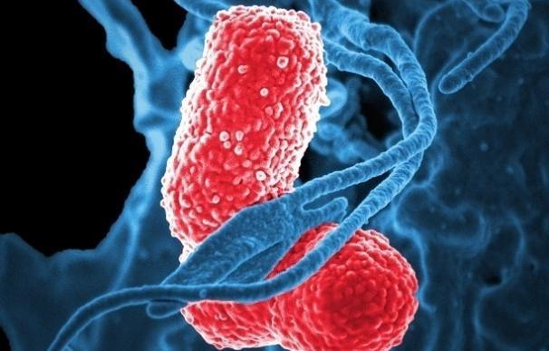 Ingenieros diseñan bacterias que registran la inflamación intestinal para diagnosticar enfermedades crónicas