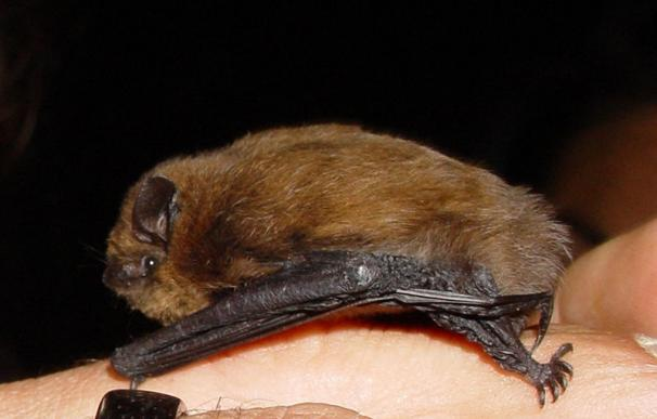 El Govern instalará más cajas refugio para murciélagos que ayudan a controlar las plagas