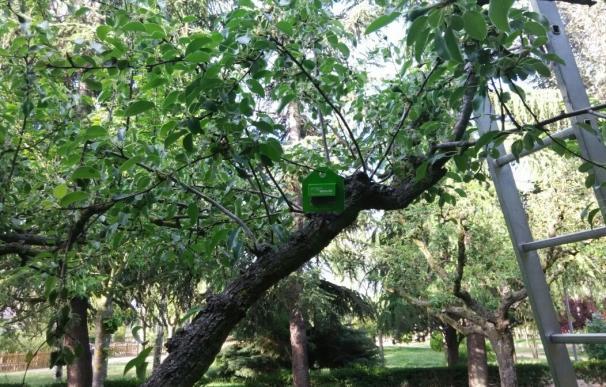 Un sistema con insectos permitirá luchar contra plagas en árboles de Salamanca
