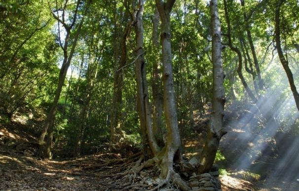Profor promueve la creación del 'céntimo verde' para duplicar la superficie de bosques en Canarias
