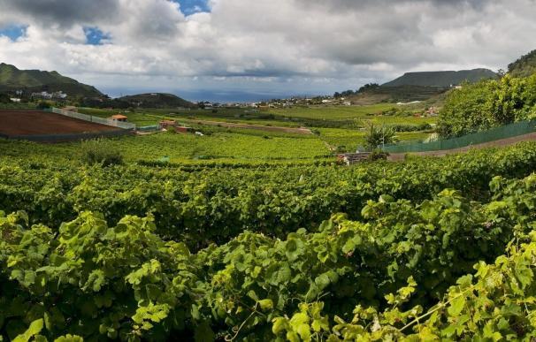 Canarias, región vinícola con menos referencias en medios peninsulares en 2015