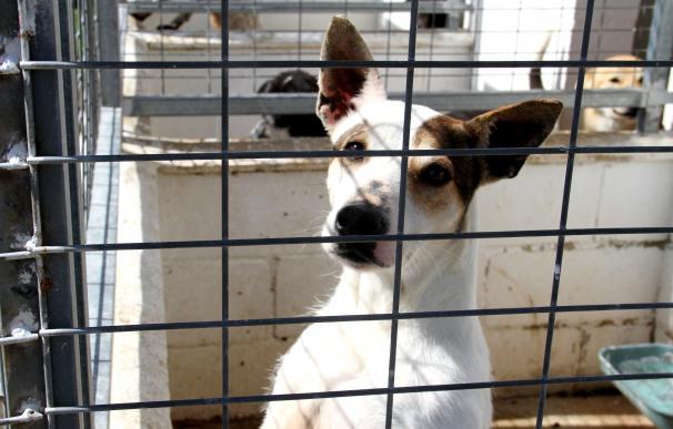 Adoptados 68 perros tras mes y medio de servicio de la web del Refugio Provincial de Animales de Diputación