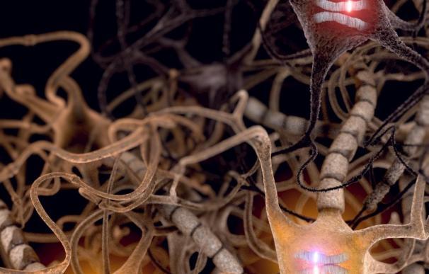 Investigadores demuestran que la células cerebrales prefieren el gen de un progenitor sobre el del otro