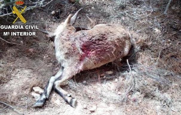 Investigan a un cazador furtivo que cayó por un barranco con la cabra abatida tras ser descubierto