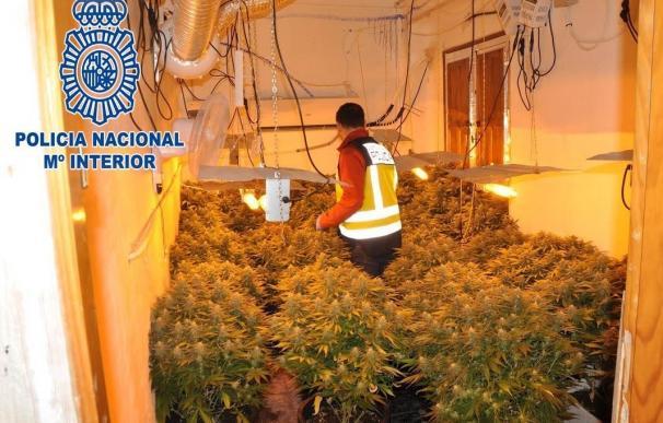 Detenidos los tres responsables de una plantación de marihuana en un piso en pleno centro de Alcantarilla