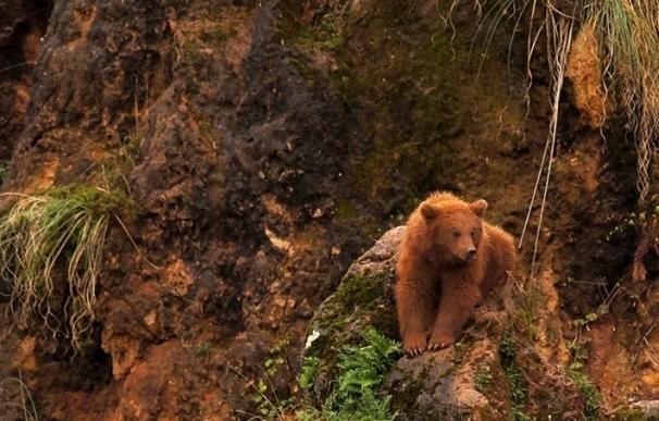 Se busca un oso en las inmediaciones de Cabárceno tras el aviso de unos jóvenes
