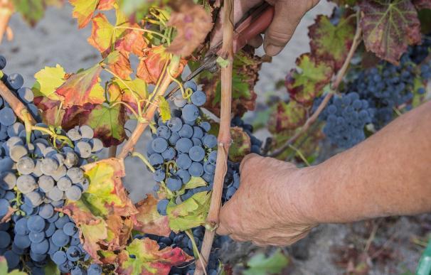 España, tercer productor mundial de vino, con 37,8 millones de hectolitros producidos en 2016