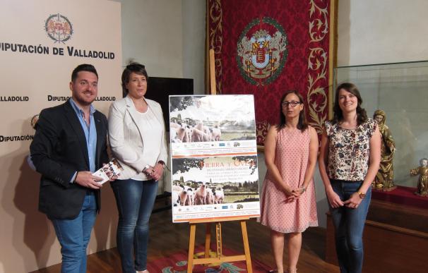 Mayorga (Valladolid) reivindica este fin de semana la tradición ganadera de la zona con la feria 'Tierra y Oveja'