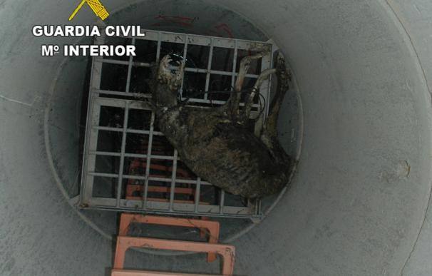 La Guardia Civil investiga a un vecino de Ciudad Real por la muerte de un galgo por ahorcamiento