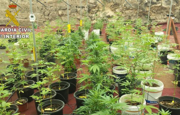 Localizan una plantación de marihuana en Las Palmas de Gran Canaria e investigan a una persona