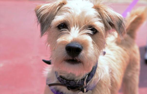 La comarca mantiene la idea de crear una perrera en Cogersa y pide reunirse con el Principado