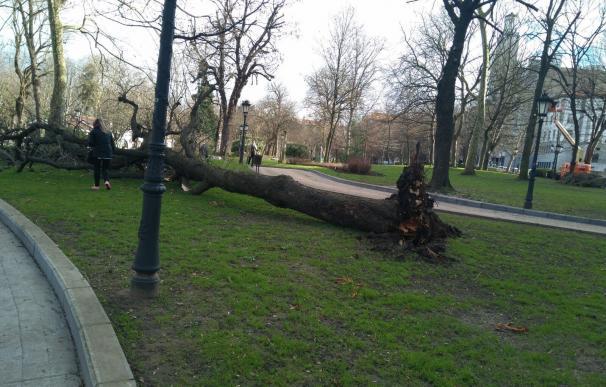Caída de árboles y ramas en carreteras, las incidencias mayoritarias de las 275 registradas por el 112 Galicia