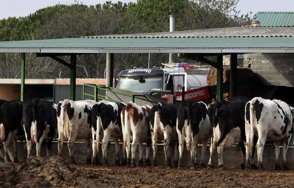 UPA relaciona los contratos lácteos con el cierre de más de 80 explotaciones al mes