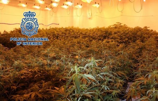 La Policía Nacional detiene a dos hermanos e interviene 395 plantas de cannabis sativa