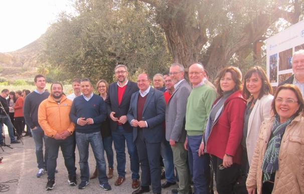 PP, primer grupo político de España en proponer una ley que protege los árboles de más de 200 años de antigüedad